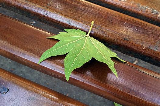Fallen Leaf by Marinela Feier