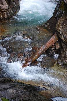 Fallen Log by Gene Ritchhart