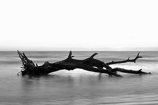 Fallen Tree in Ocean by Bruce Gourley