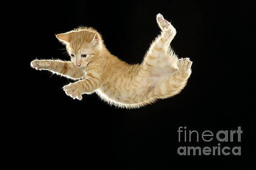 Jean-Michel Labat - Falling Kitten
