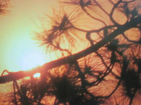 Falling to sun's love. by Maneesh kumar