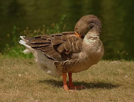 Fancy Goose by Ramona Whiteaker