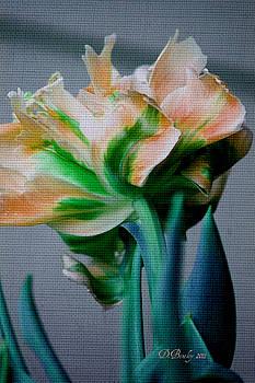 Fancy Tulip by Donna Bentley