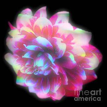 Fantastic Flower by Gayle Price Thomas