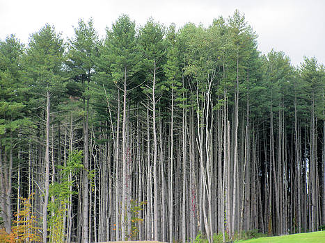Fantasy Forest by Gordon Wendling