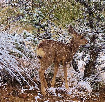 Fawn's First Snow by Feva Fotos