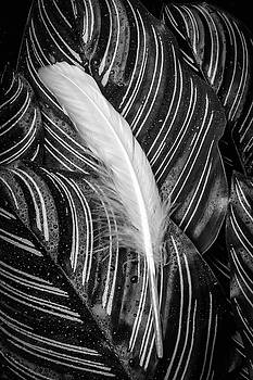 Feather On Calatheas Leaves by Garry Gay
