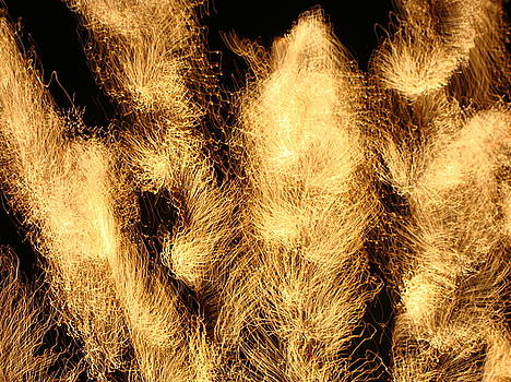 Feathered Fireworks by Peter McAuley