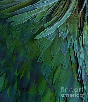 Feathers Abstract 1 by Terry Lynn Johnson