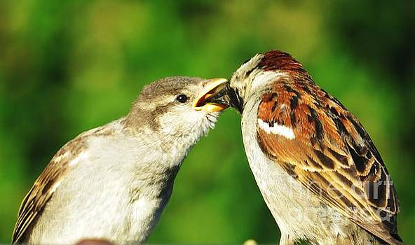 Judy Via-Wolff - Feeding Baby Sparrow 3