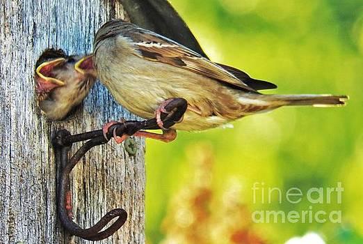Judy Via-Wolff - Feeding Baby Sparrows 1