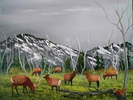 Feeding Elk by Al Johannessen