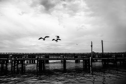 Feeding Gulls by Scott Pellegrin