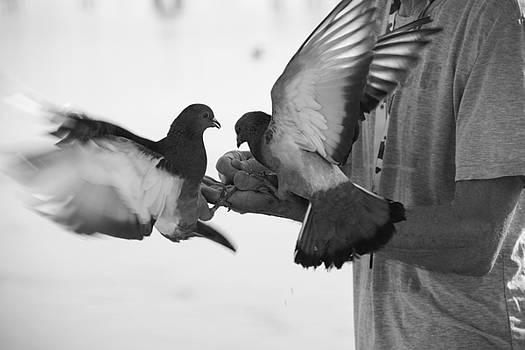 Feeding Pigeons  1 by Zeljko Dozet