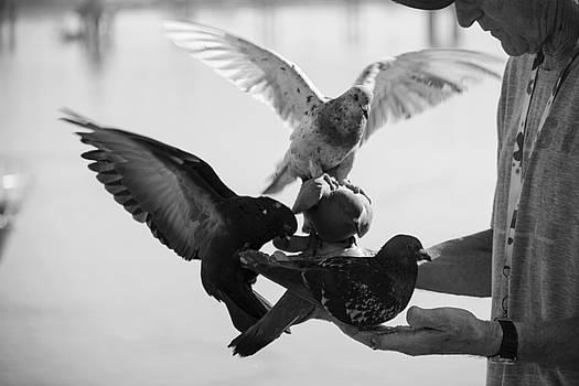 Feeding Pigeons  2 by Zeljko Dozet