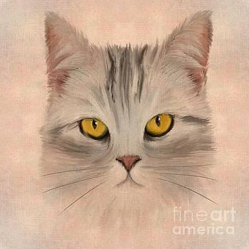 Felis catus by John Edwards