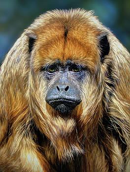 Female Howler Monkey by Savannah Gibbs