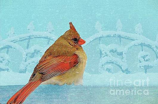 Female Northern Cardinal in Winter by Janette Boyd