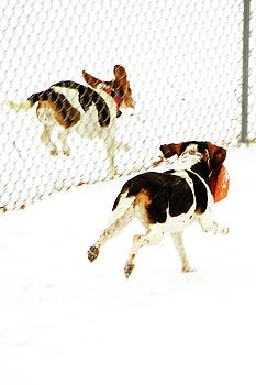Fence Line Race by Paul Wash