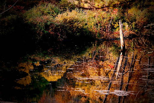 Emily Stauring - Fence Post in the Pond