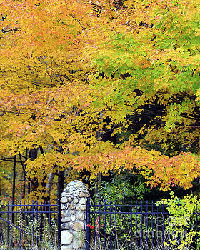 Fenced in Color by Kathy DesJardins