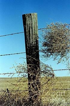 Fences and Tumbleweeds by Carole Martinez