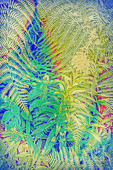 Fern and Fireweed 01 by Pete Edmunds