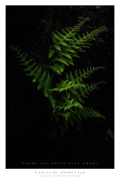 Fern by Chad Tracy