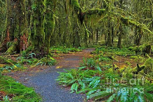 Adam Jewell - Fern Laden Path