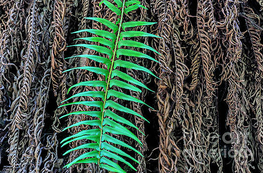 Fern by Terry Lynn Johnson