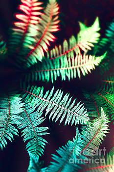 Ferns 01A by Pete Edmunds
