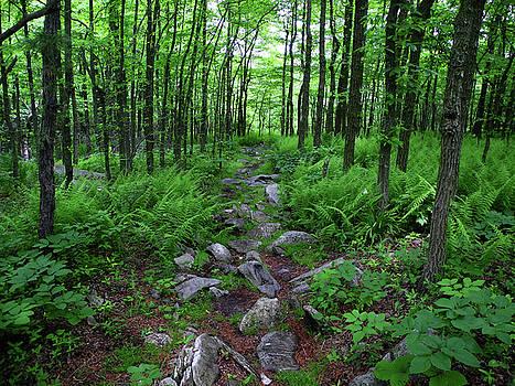 Ferns Above Lehigh Gap 2 by Raymond Salani III