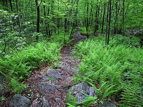 Ferns Above Lehigh Gap 3 by Raymond Salani III