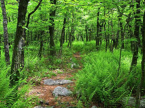 Ferns Above Lehigh Gap by Raymond Salani III