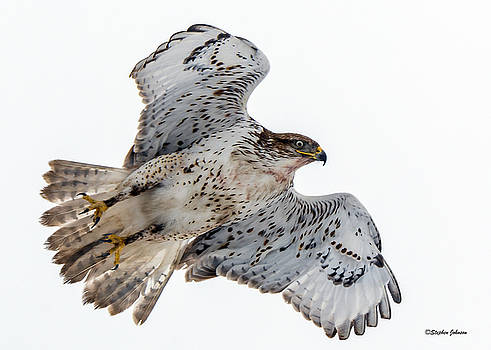 Ferruginous Hawk Leaving Perch by Stephen Johnson