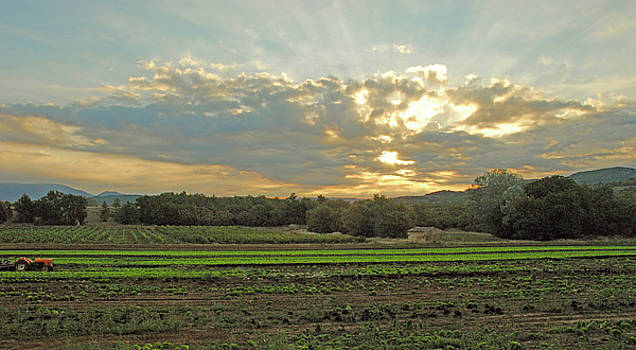 Field at Sunrise by Robert Abramson