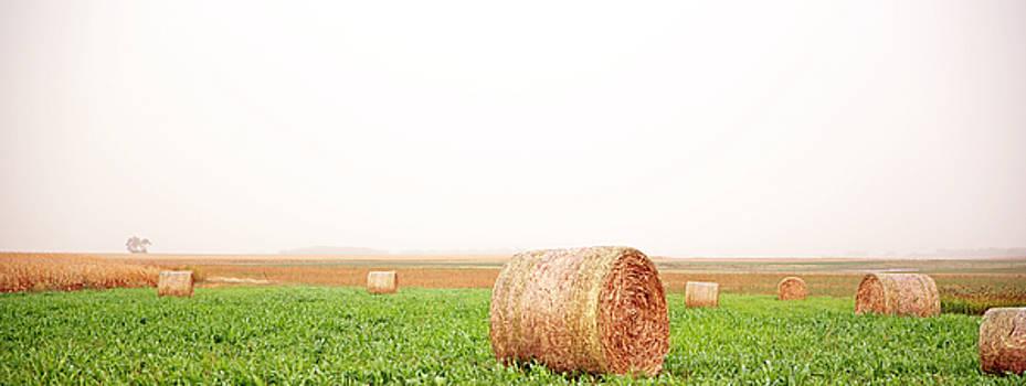 Field of Bales by Betty Morgan