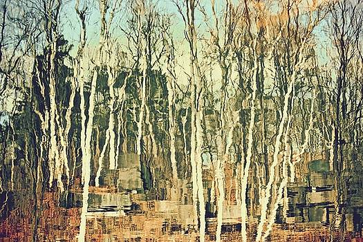 Field Of Birch by Gillis Cone