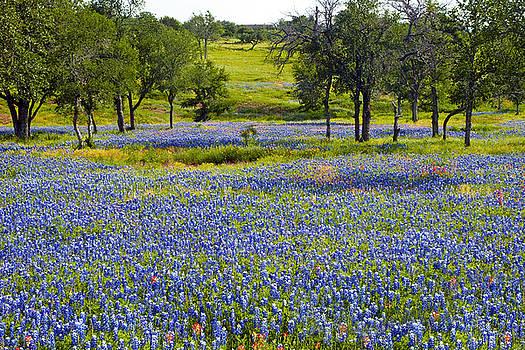 Field of Blue by Robert Anschutz