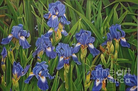 Field Of Blue by Sid Ball