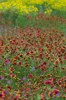 Field Of Color by Bob Marquis