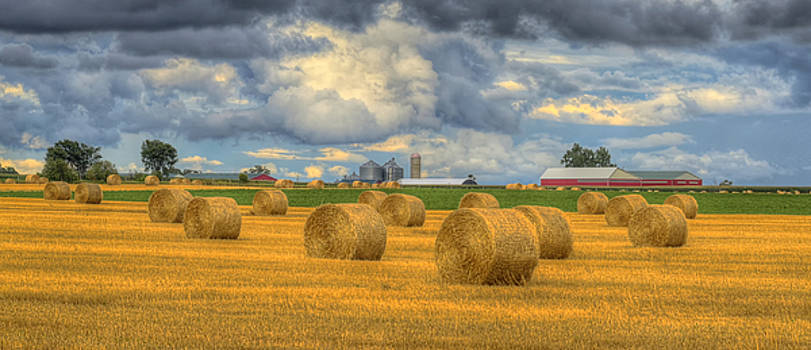 Field of Gold by Claudio Bacinello