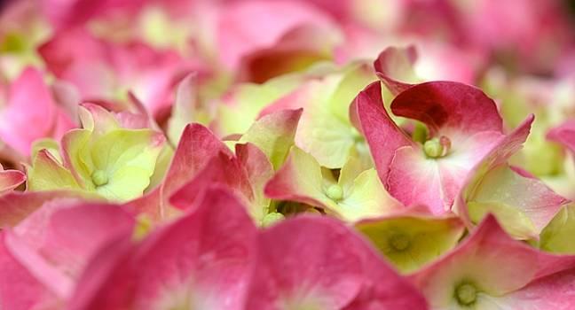 Corinne Rhode - Field of Petals