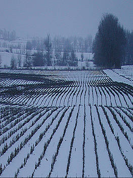 Field of snow by Jim Wright