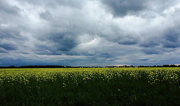 Field of Weeds by Dan McCafferty