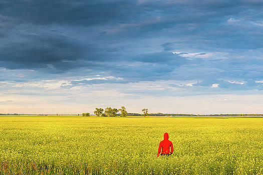 Field Of Yellow by Nebojsa Novakovic