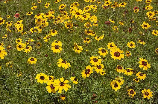 Field of Yellow by Robert Anschutz