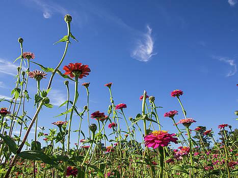 Fields of Glory by Valeria Donaldson