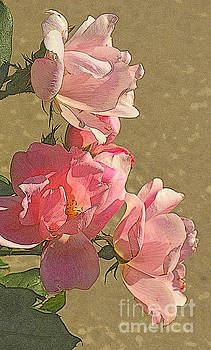 Fifty Shades of Pink - Roses on a Summer Day by Miriam Danar