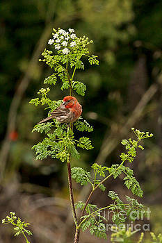 Finch and Flower by Natural Focal Point Photography